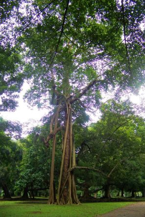Botanische tuin (9)