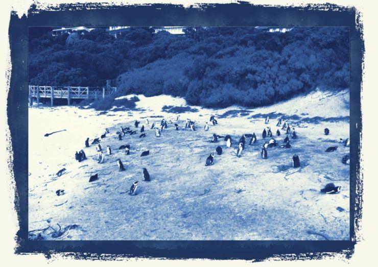 Boulders Beach (12)
