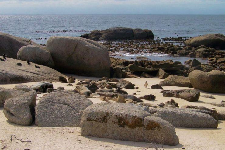 Boulders Beach (16)