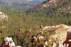 Bryce Canyon NP 50