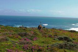Cape of Good Hope NP 17