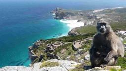Cape of Good Hope NP 31