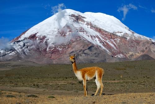 Chimborazo (1)