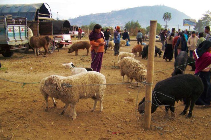 Dierenmarkt (1)