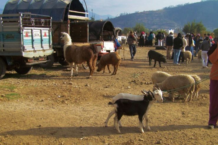 Dierenmarkt (15)
