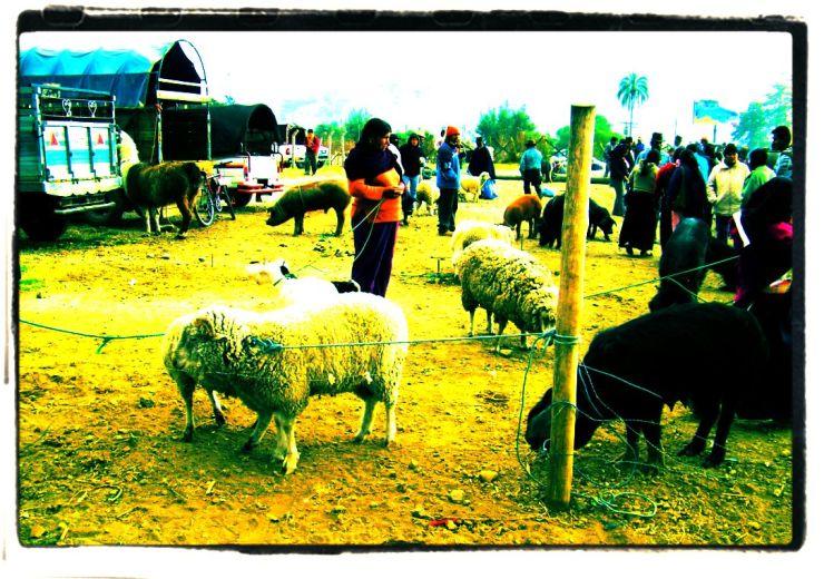 Dierenmarkt (2)