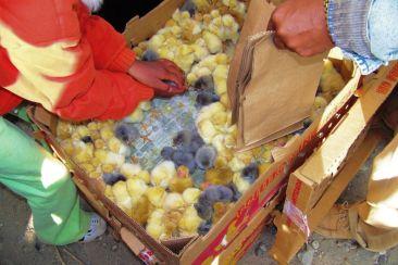 Dierenmarkt (21)