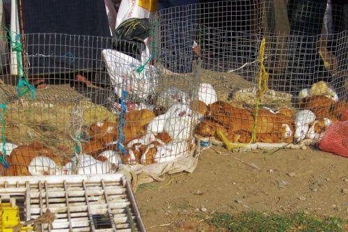 Dierenmarkt (23)