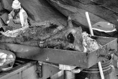 Dierenmarkt (4)