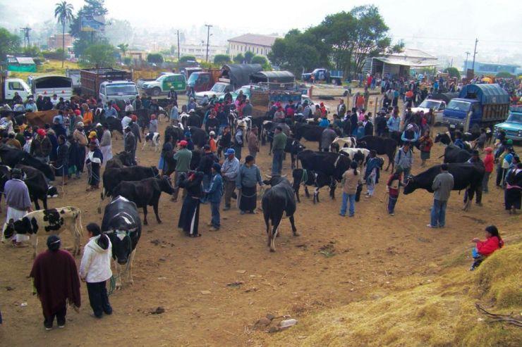 Dierenmarkt (5)