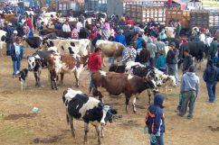 Dierenmarkt (6)