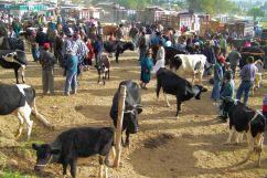Dierenmarkt (8)