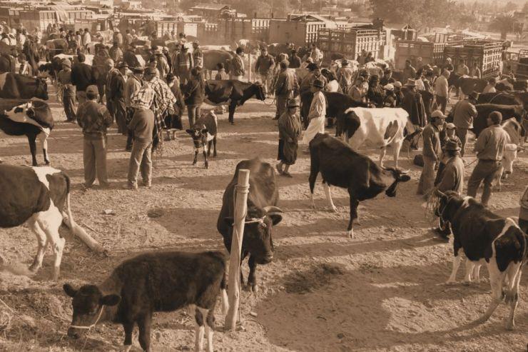 Dierenmarkt (9)