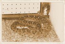 Dumazulu 06 (snake farm in hotel)