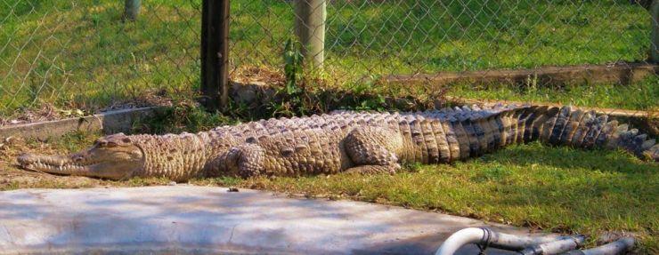 Dumazulu 11 (croc farm in hotel)
