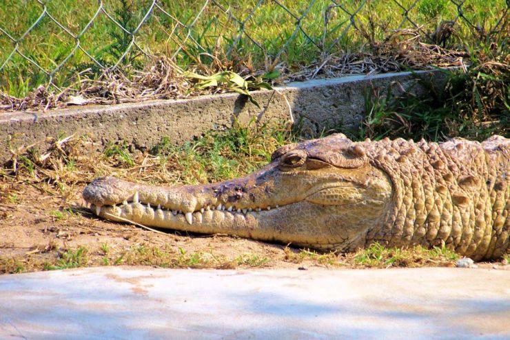 Dumazulu 12 (croc farm in hotel) - kopie