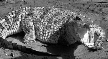 Dumazulu 13 (croc farm in hotel) - kopie