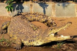Dumazulu 14 (croc farm in hotel) - kopie