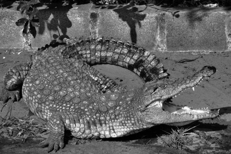 Dumazulu 14 (croc farm in hotel)