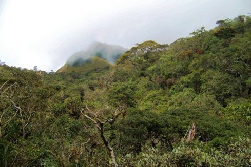 Horton Plains NP (12)