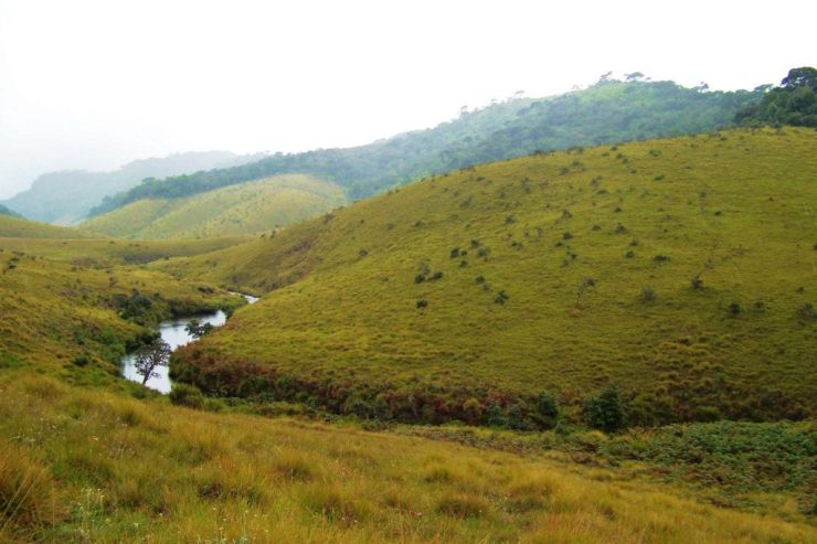 Horton Plains NP (18)