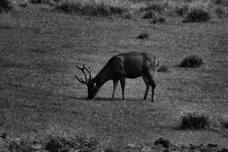 Horton Plains NP (8)
