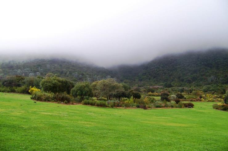 Kirstenbosch Garden (10)