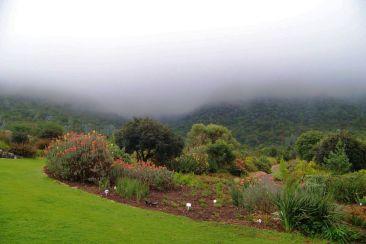 Kirstenbosch Garden (11)