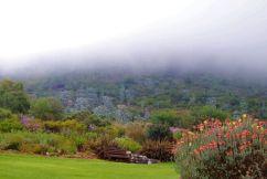 Kirstenbosch Garden (12)