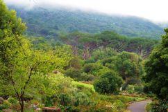 Kirstenbosch Garden (13)
