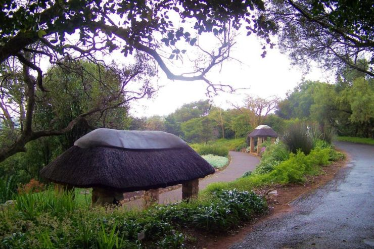 Kirstenbosch Garden (14)