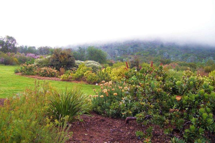 Kirstenbosch Garden (16)