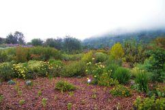Kirstenbosch Garden (17)