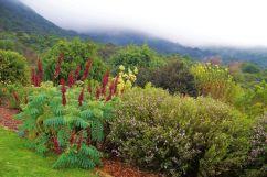 Kirstenbosch Garden (18)