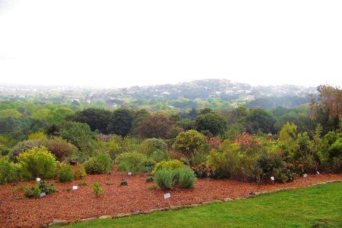 Kirstenbosch Garden (20)
