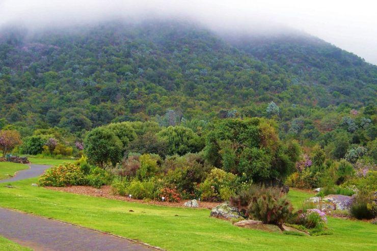 Kirstenbosch Garden (22)