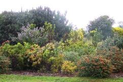 Kirstenbosch Garden (23)