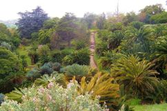 Kirstenbosch Garden (25)