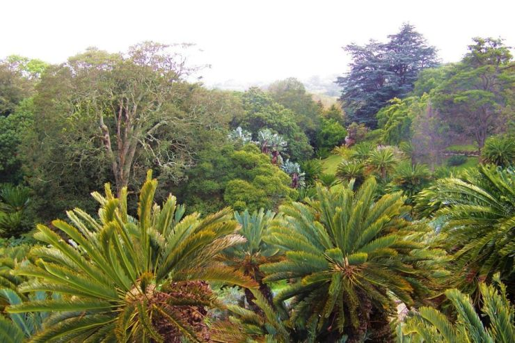 Kirstenbosch Garden (26)