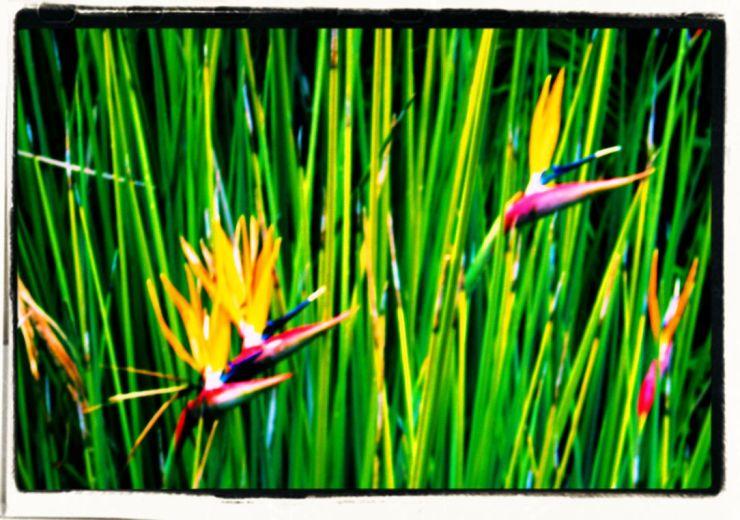 Kirstenbosch Garden (28)
