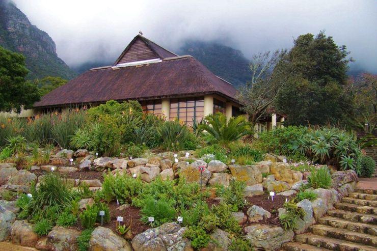 Kirstenbosch Garden (29)