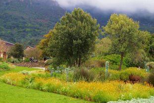 Kirstenbosch Garden (30)