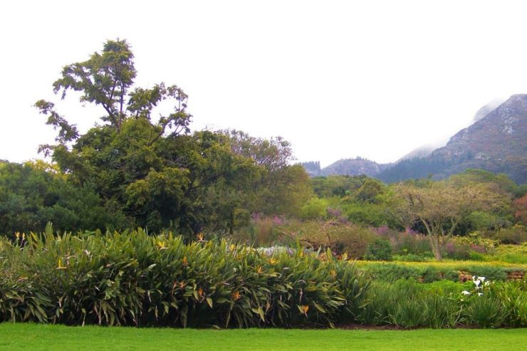 Kirstenbosch Garden (31)