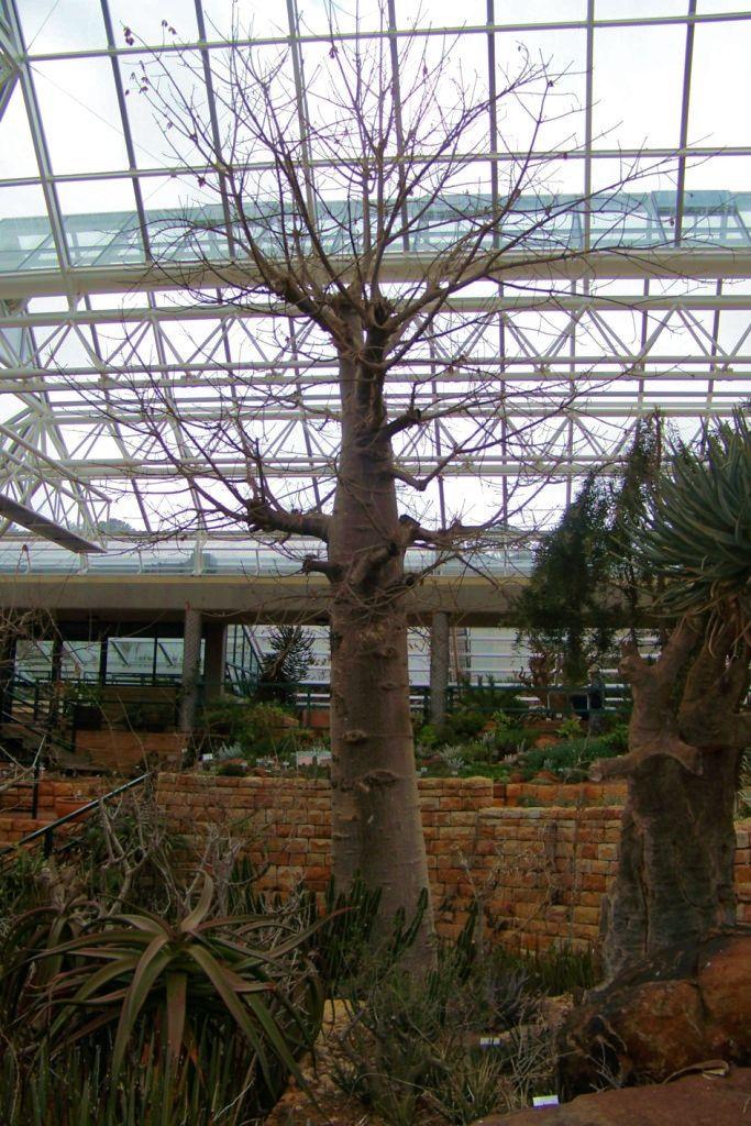 Kirstenbosch Garden (32)