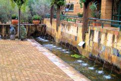 Kirstenbosch Garden (34)