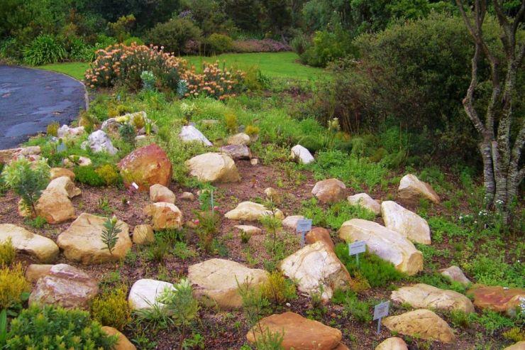 Kirstenbosch Garden (4)