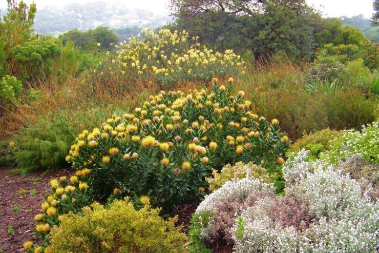 Kirstenbosch Garden (5)
