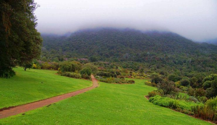 Kirstenbosch Garden (7)