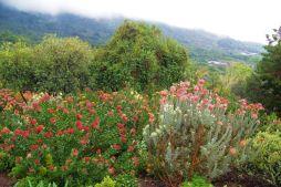 Kirstenbosch Garden (8)