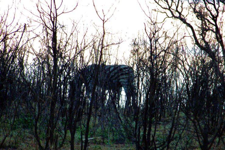 Kruger NP 01